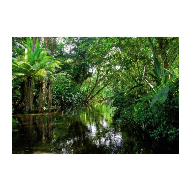 Papier peint trompe l 39 oeil paysage nature zen asie tropicale for Papier peint trompe l oeil fenetre