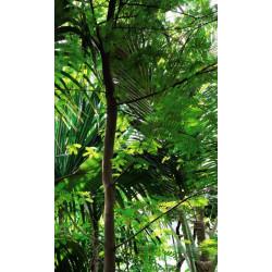 Tenture murale extérieure plante de la jungle