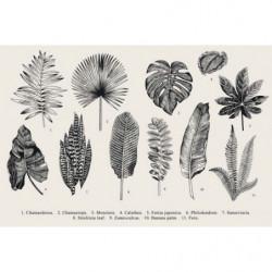 Tableau vintage herbier design