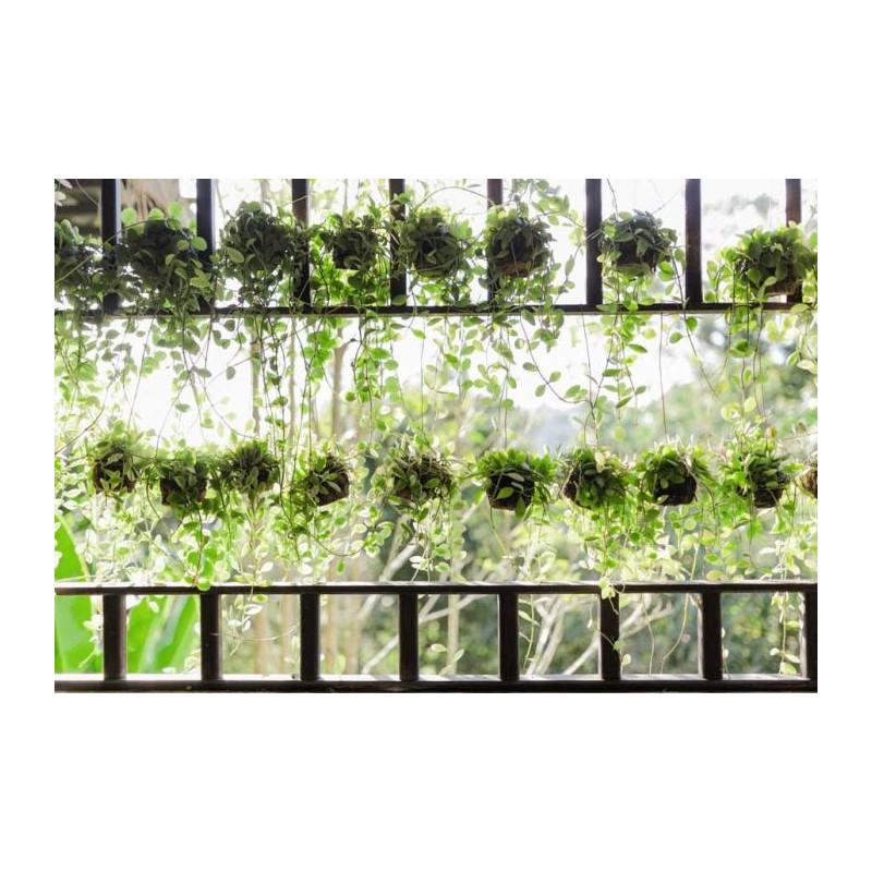 Jardini re suspendue poster plantes suspendues en cascade for Plantes vertes exterieur