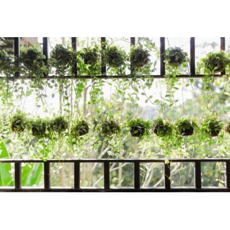HANGING PLANTER Wallpaper