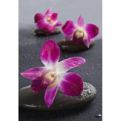 Tableau zen fleurs rose sur des galets