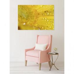 Foto macro de una flor amarilla con rocío matutino