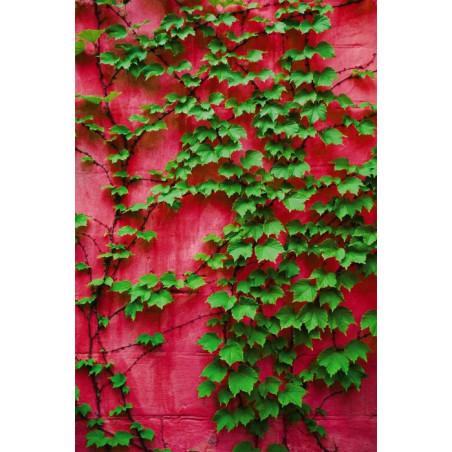 PURPLE IVY Wall hanging