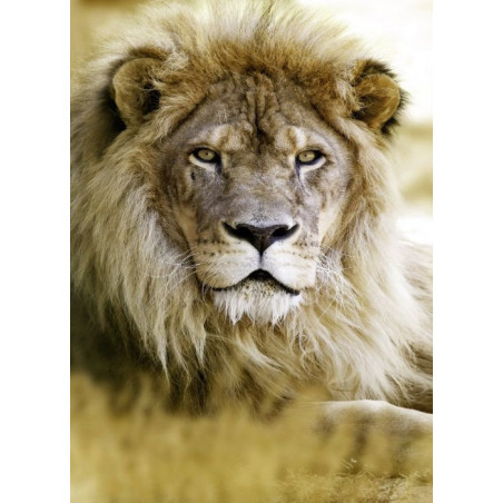 Lienzo impreso LION