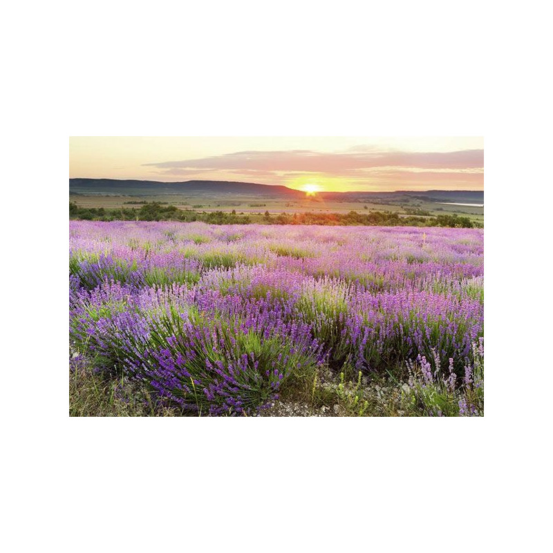 DAWN IN PROVENCE Poster