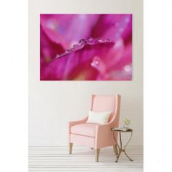 Tableau fleur rose et rosée du matin en macrophotographie