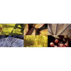 Autumnal composition painting in panoramic format