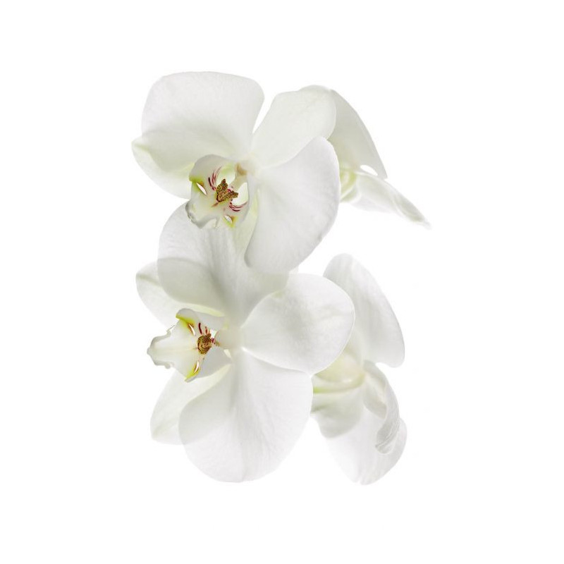Déco orchidée restaurant