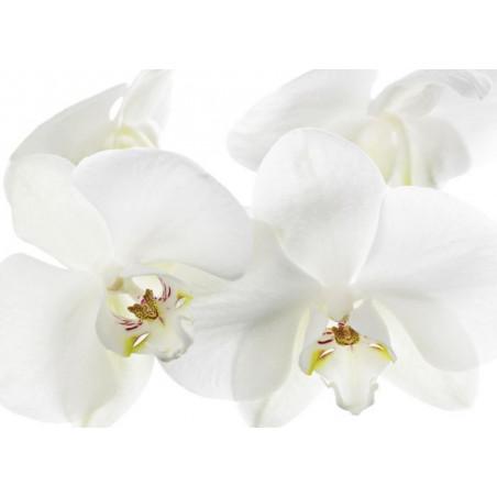 Tableau ORCHIDEE