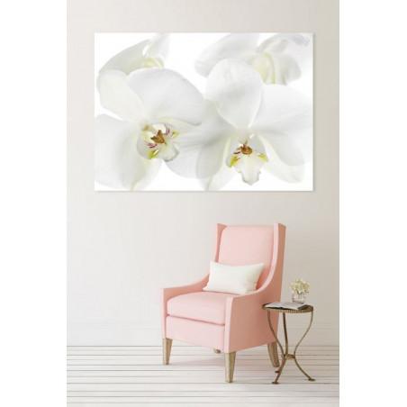 ORCHIDEE canvas print