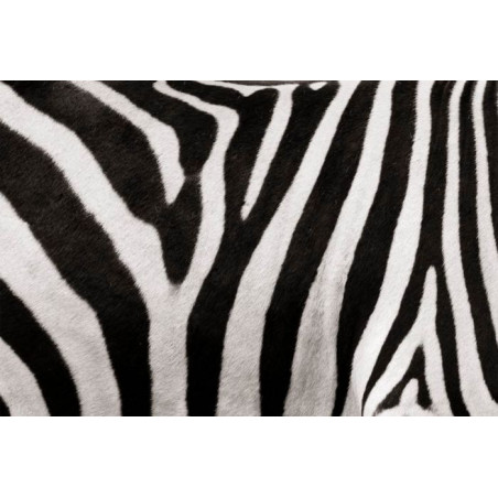 Papel pintado OUT OF AFRICA