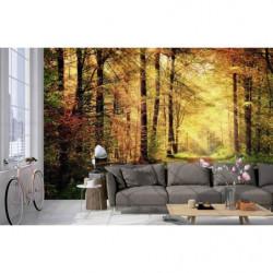 Papier peint paysage coucher de soleil dans la forêt