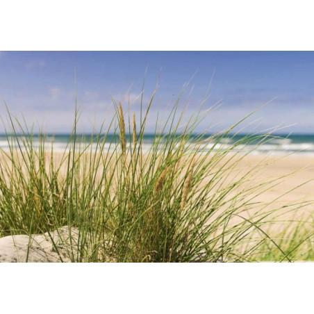 MORNING BEACH Poster