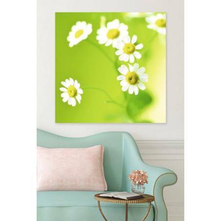 GREEN DAISIES canvas print