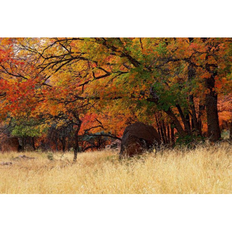 Poster AUTOMNE