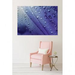 Macrophotographie d'un pétale de fleur bleu imprimée en tableau mural