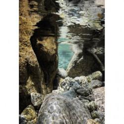 Tableau photo minéral sous l'eau