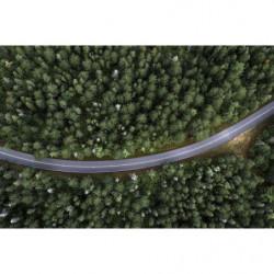 Tableau route au milieu de la forêt