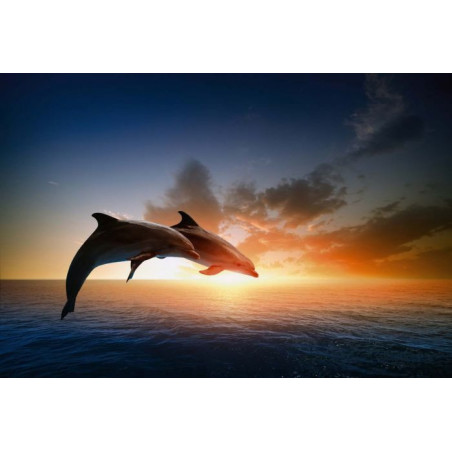 DOLPHINS JUMP Poster