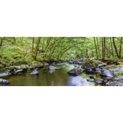 Brise vue balcon forêt et rivière dans la nature