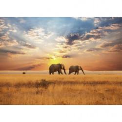 Tableau coucher de soleil dans la savane