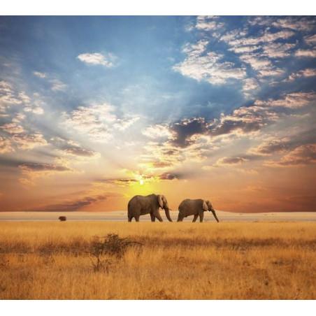 Papel pintado SABANA AFRICANA