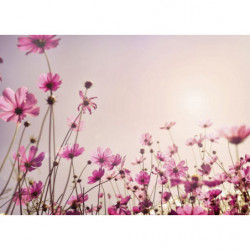Tableau géant fleurs roses