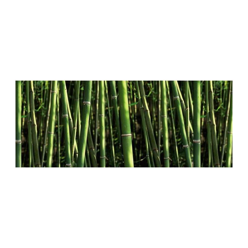brise vue bambou brise vue haut pour jardin protg du voisinage - Brise Vue Jardin