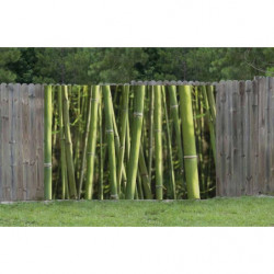Brise vue bambou motif tige verte