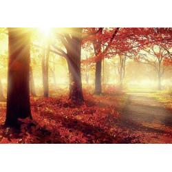 Papier peint panoramique forêt aux couleurs d'automne