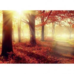 Tableau paysage forêt en automne