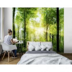 Papier peint panoramique forêt avec rayon du soleil