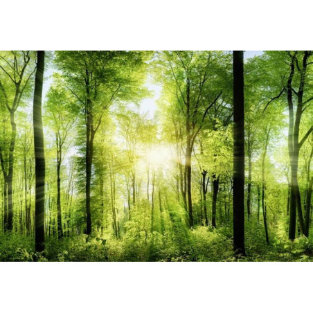 UNDERGROWTH IN THE MORNING Poster