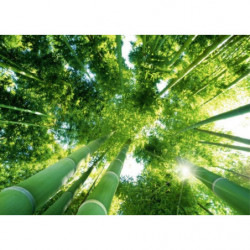 Tableau zen bambous verts