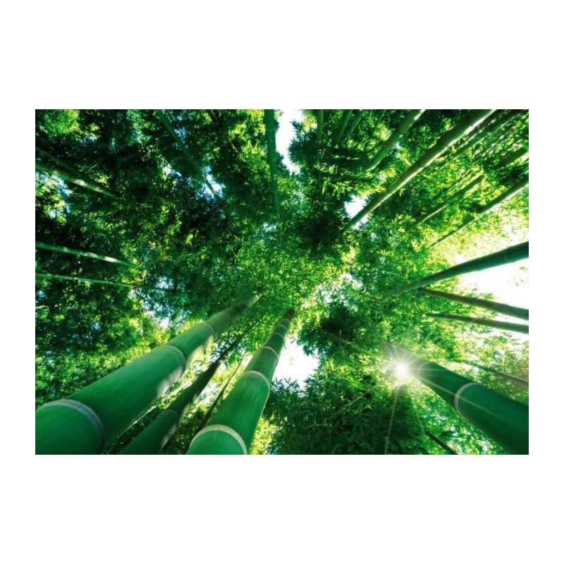 Poster g ant foret affiche photo de la for t de bambous for Decoration murale zen