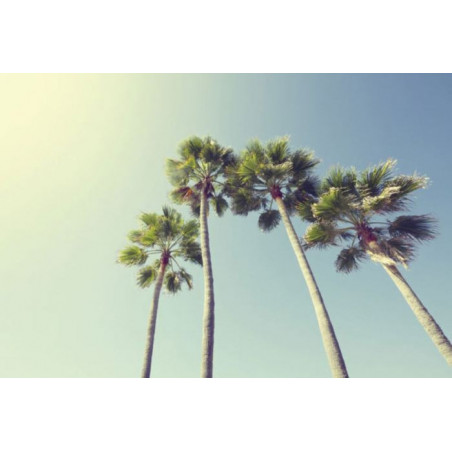 UNDER THE PALM TREES Wallpaper