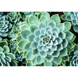 Tableau plante succulente du désert