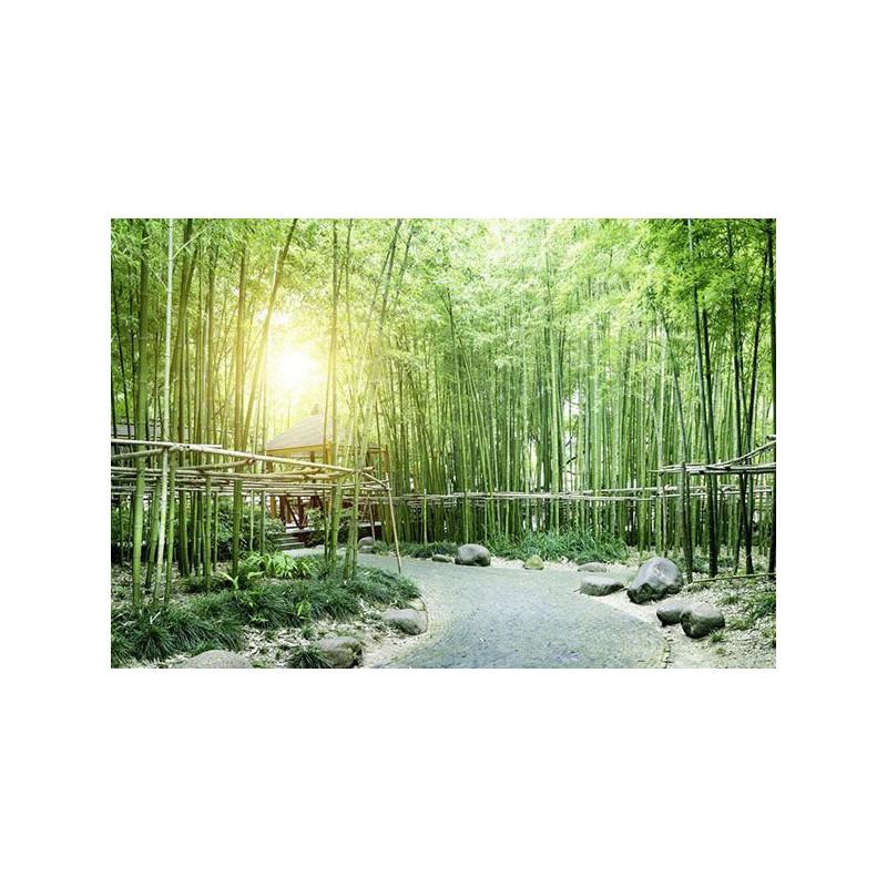 Forêt de bambous sur Scenolia