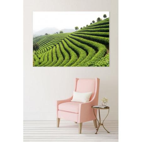 GREEN TEA canvas print