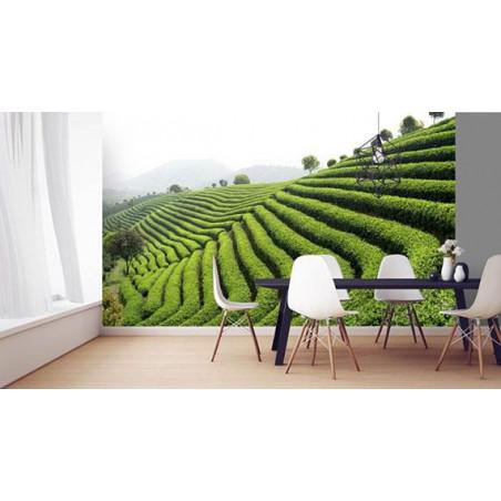 GREEN TEA wallpaper
