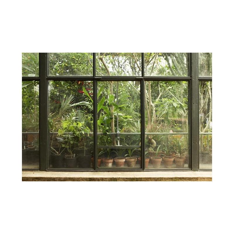 Papier peint trompe l\'oeil jungle et plantes tropicales sous serre