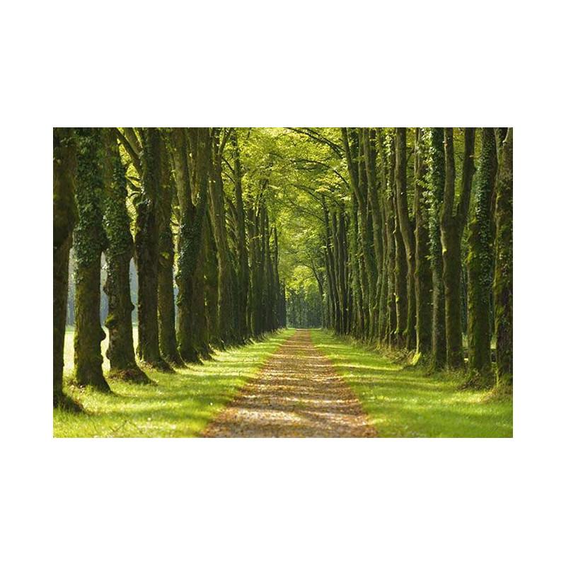 Tableau couleurs d 39 automne grand format scenolia - Tableau contemporain grand format ...