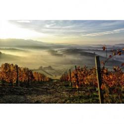 Tapisserie vigne d'automne