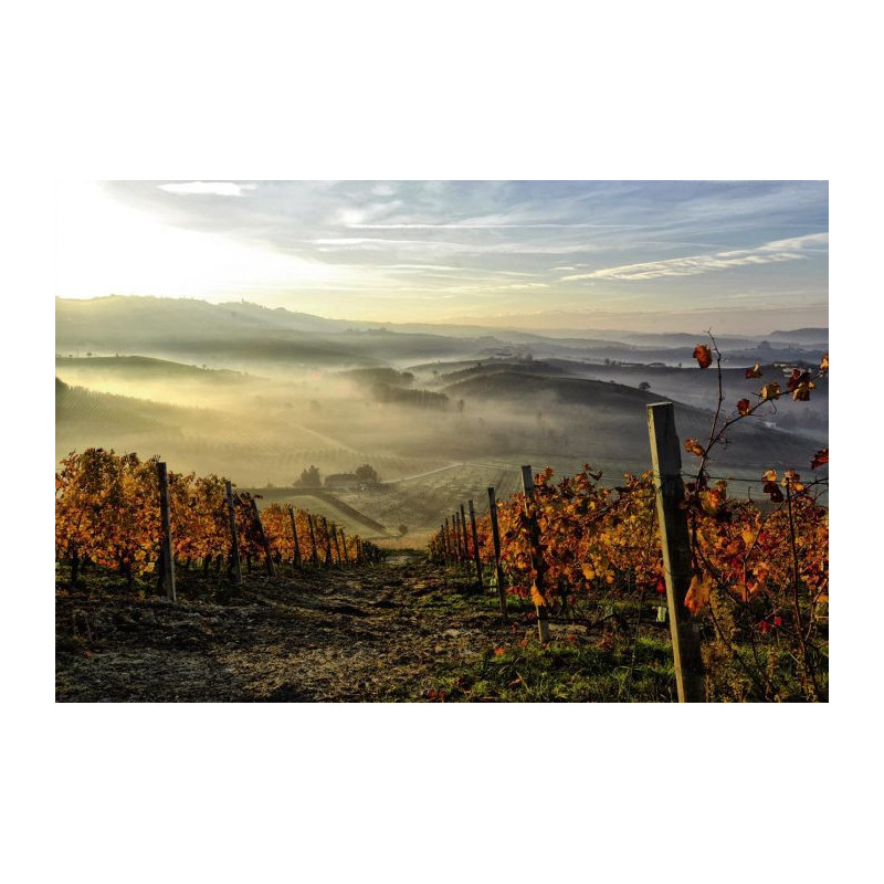 Vigne D 39 Automne Papier Peint Panoramique Campagne Vignoble