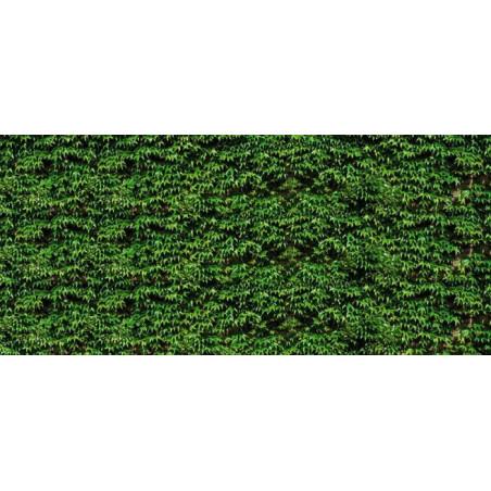 VIRGINIA CREEPER Wallpaper