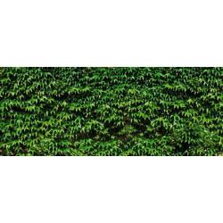 Brise vue trompe l'oeil feuillage vert de vigne vierge