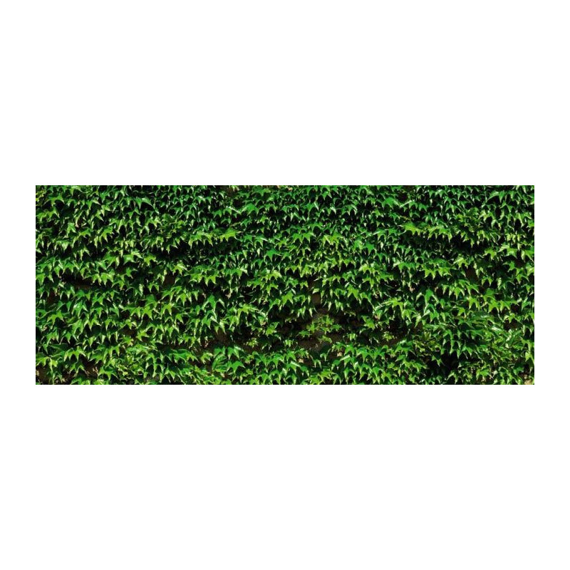 VIGNE VIERGE - Brise vue feuilles de vigne vierge sur mesure
