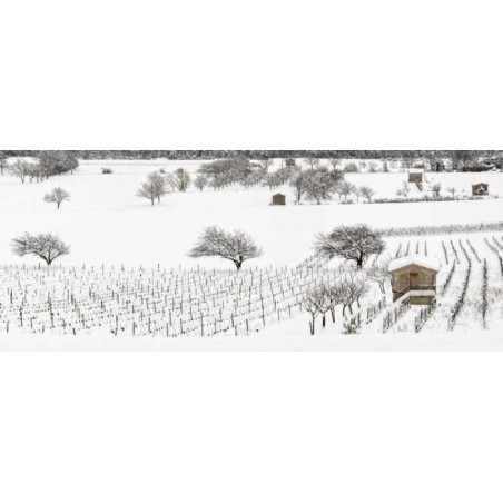 VINES UNDER THE SNOW privacy screen