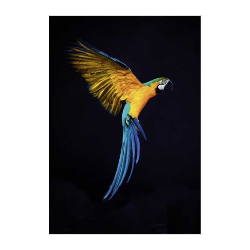 Tableau perroquet sur plexi ara de guyane multicolore for Tableau imprime sur verre